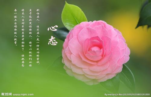 Mingwang Array image109